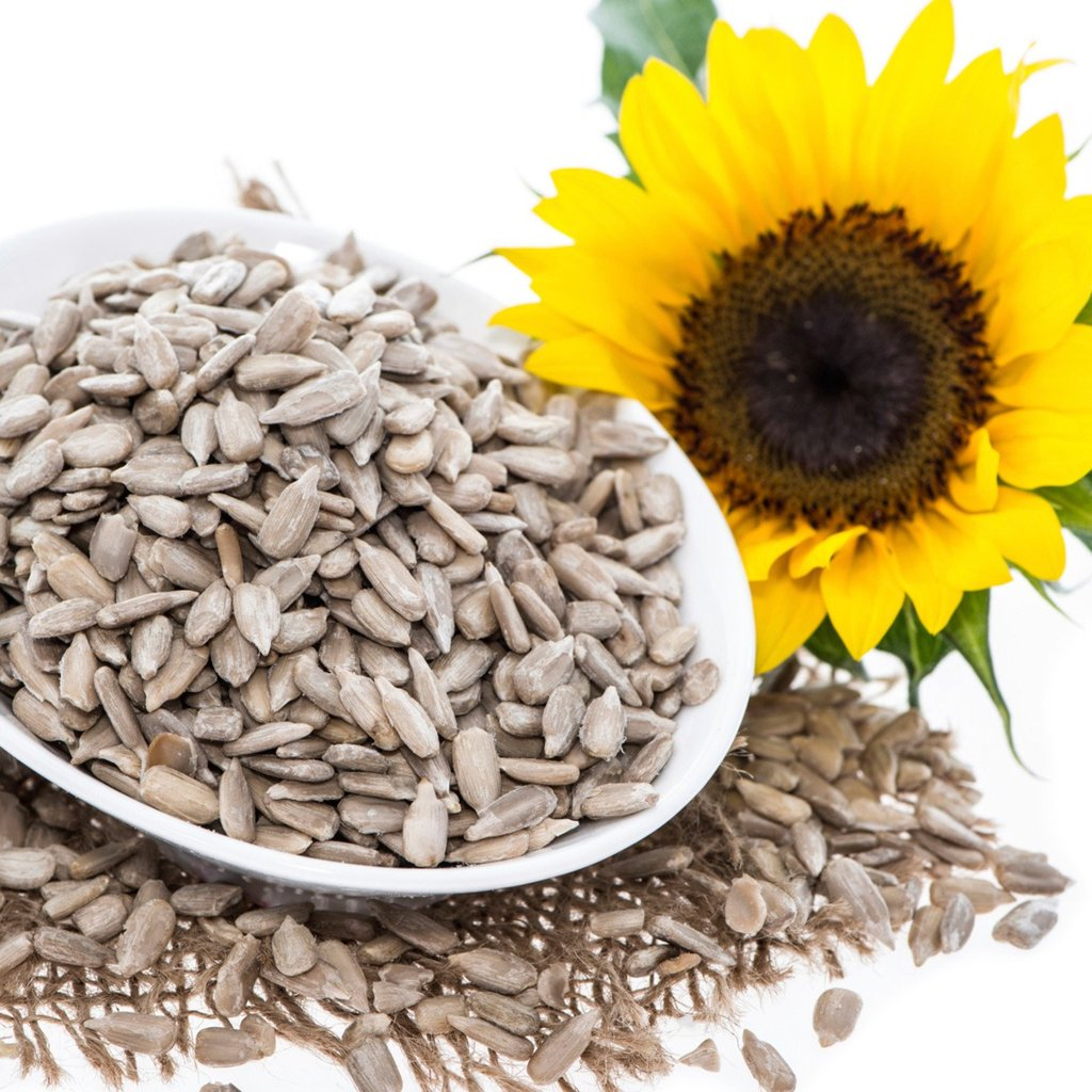 sunflower seed orchard